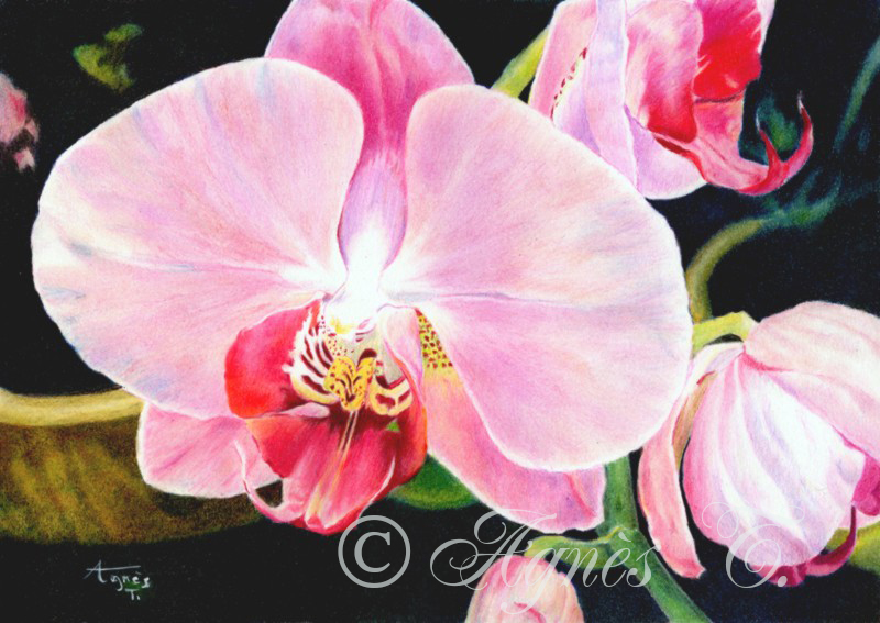 AgnesT-crayons-couleur-Orchidee