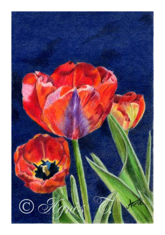 AgnesT-crayons-couleur-Tulipes