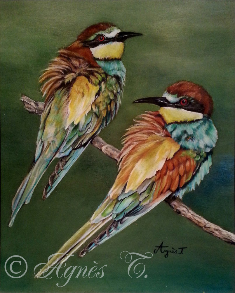 AgnesT-crayons-couleur-oiseaux