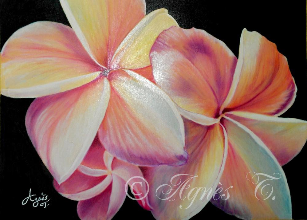 AgnesT-crayons-couleur-plumeria