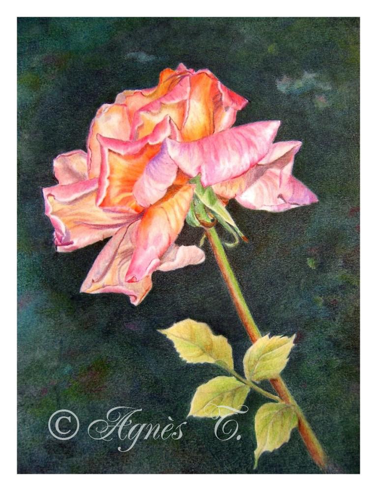 AgnesT-crayons-couleur-rose Superstar