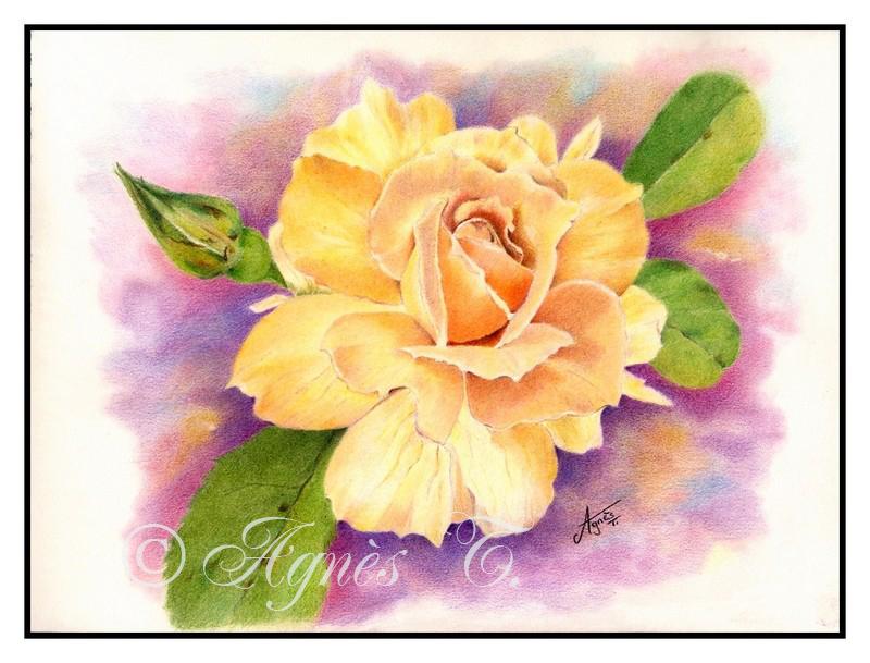 AgnesT-crayons-couleur-rose Tendresse