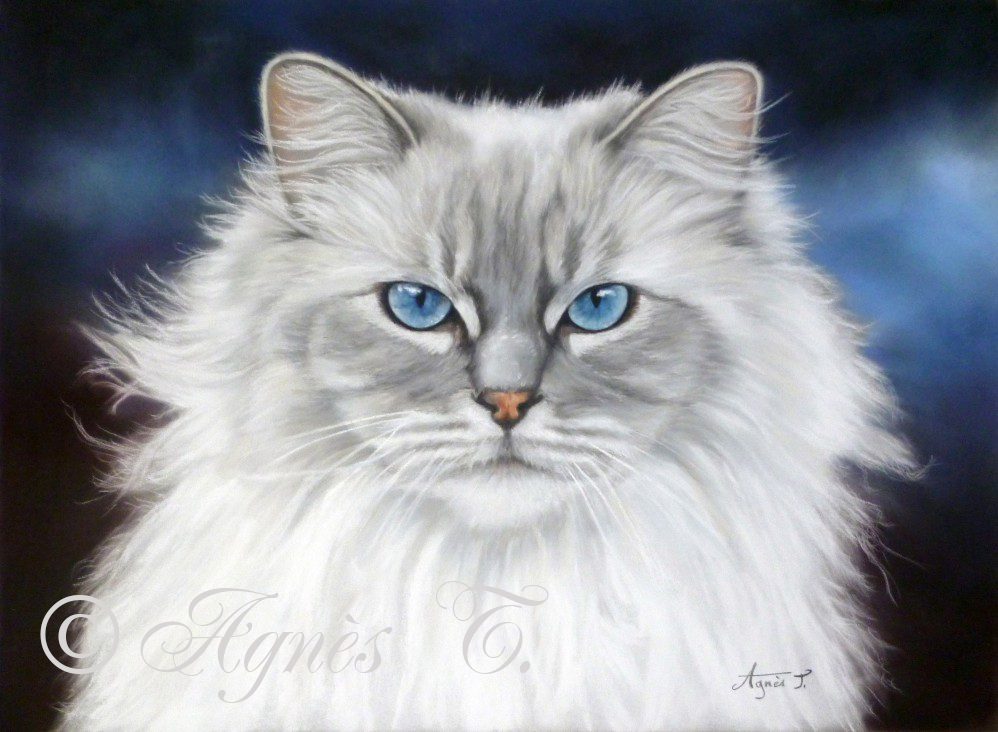 AgnesT-pastels-chat-William