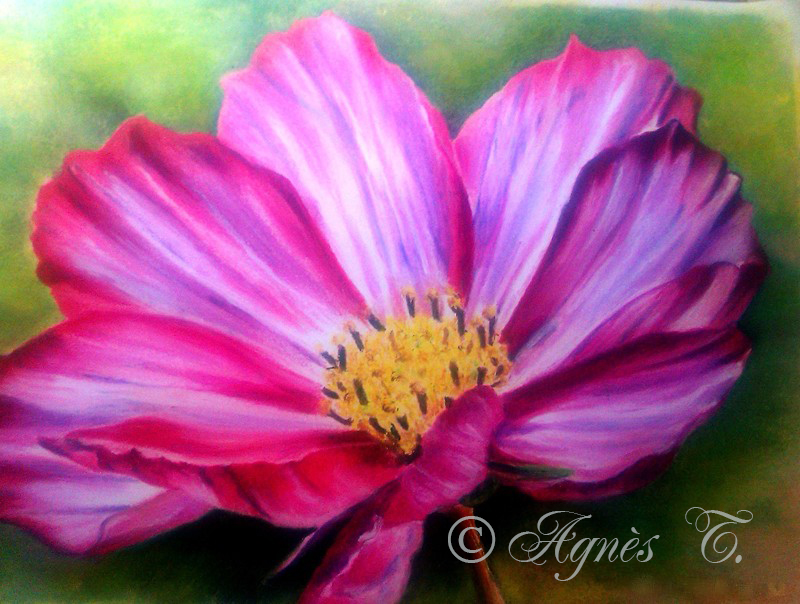 AgnesT-pastels-huile-Cosmos