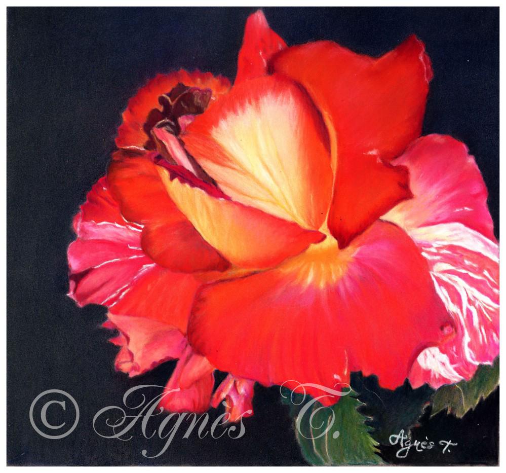 AgnesT-pastels-rose-Just-for-you