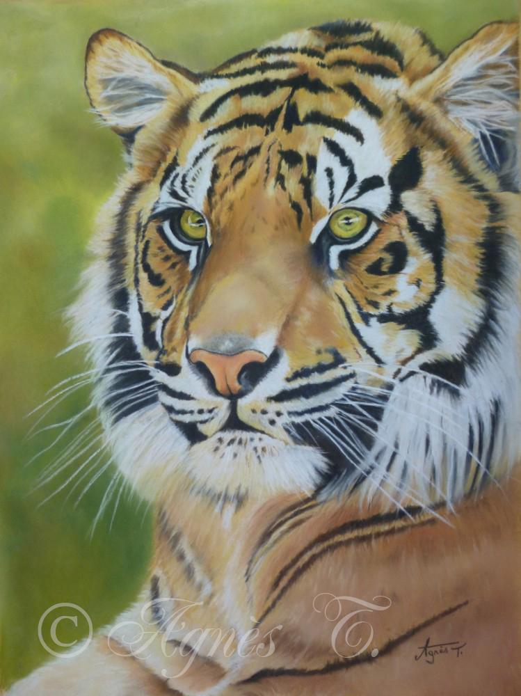 AgnesT-pastels-tigre-2