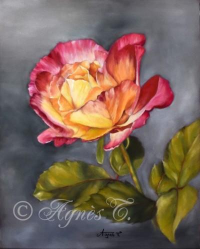 Une rose au printemps
