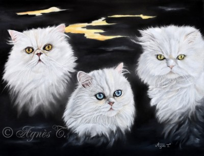Oliver, Emma et Sebastian, chats persans