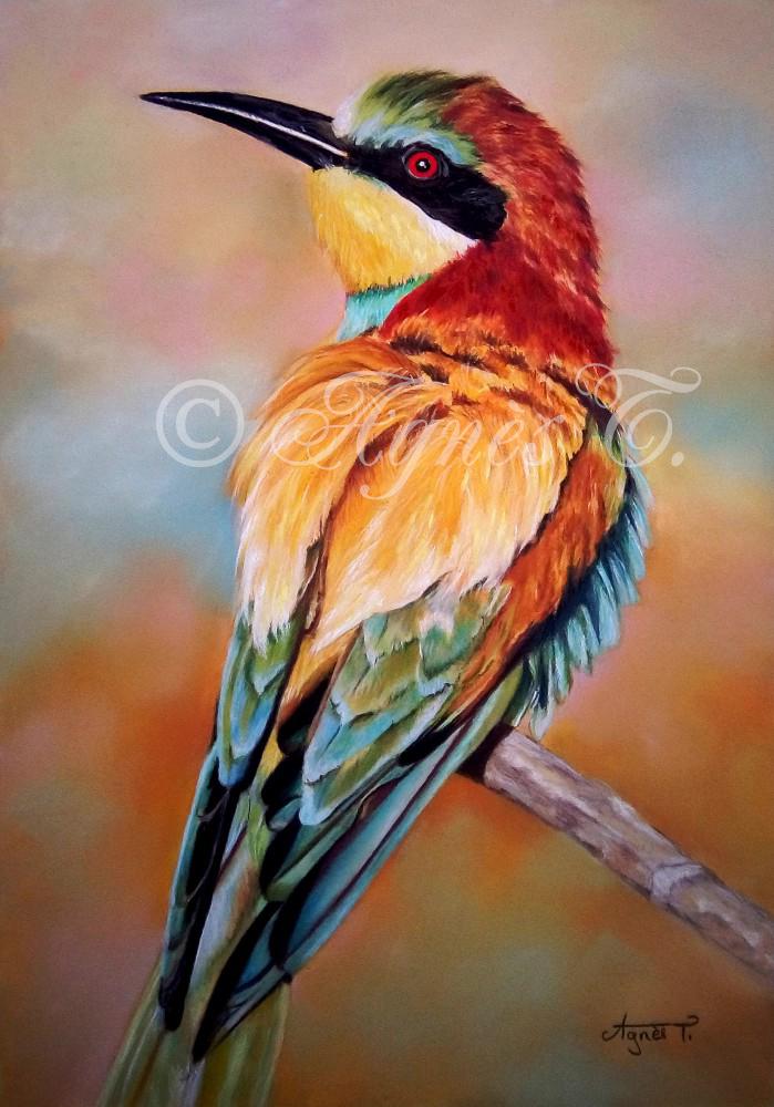Guepier, oiseau multicolore