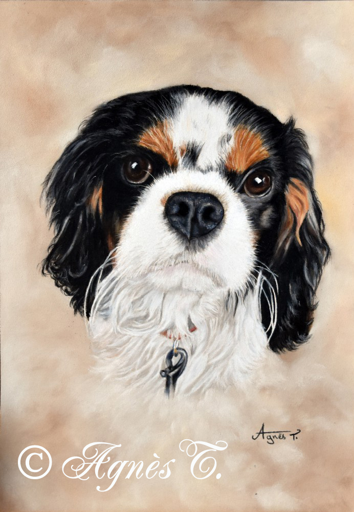 Mickey, Cavalier King Charles