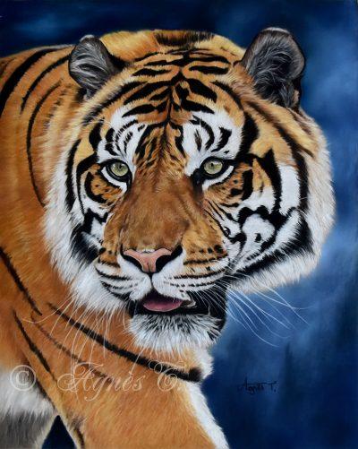 Tigre, beauté sauvage