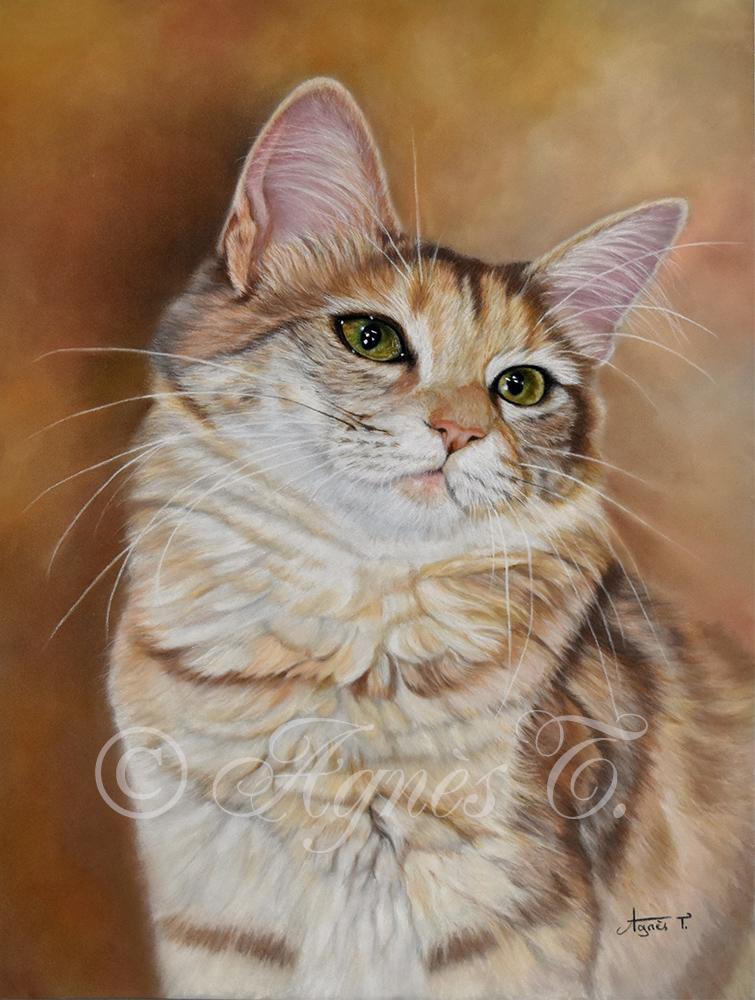 Un chat angora turc nommé Jayade