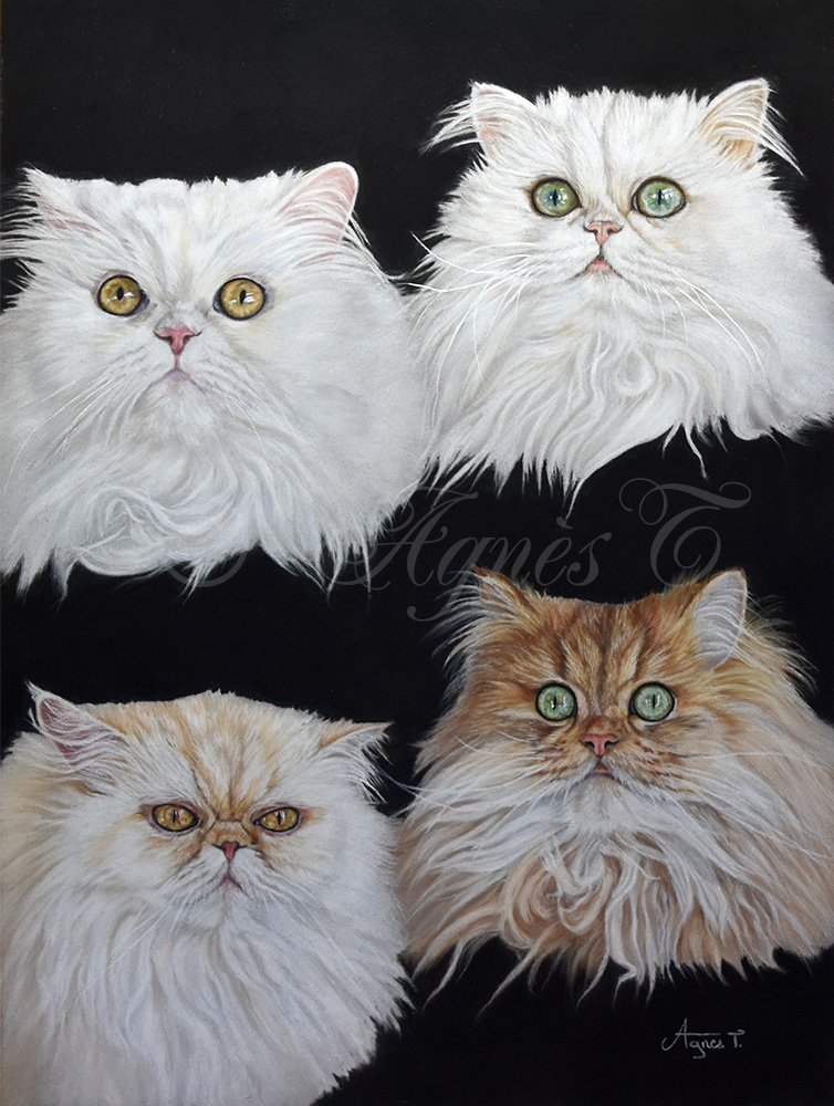 Chats persans