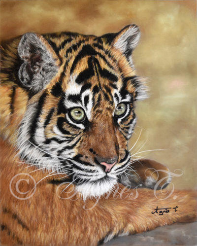 Histoire de tigre... suite