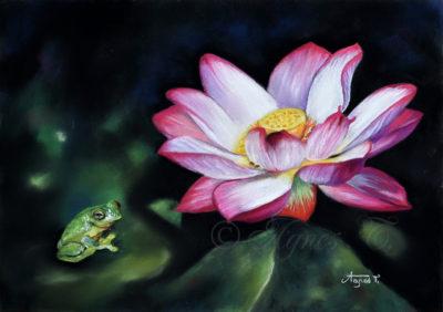 Lotus et grenouille