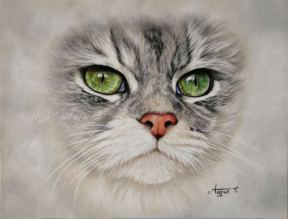 Cat close-up with green eyes