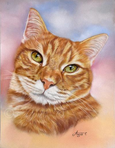 Ney Ney, un joli chat roux