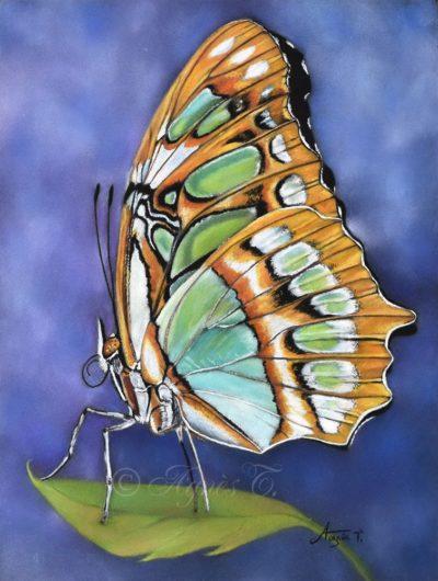 Papillon Siproeta Stelenes