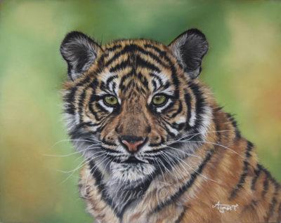 Jeune tigre