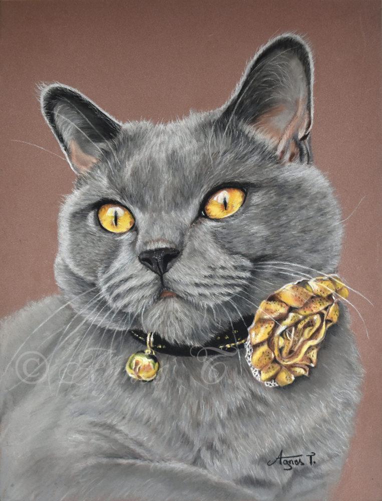 Moose, un joli chat chartreux