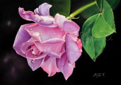 Rose parme et gouttelettes