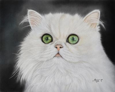 Emma, persan chinchilla