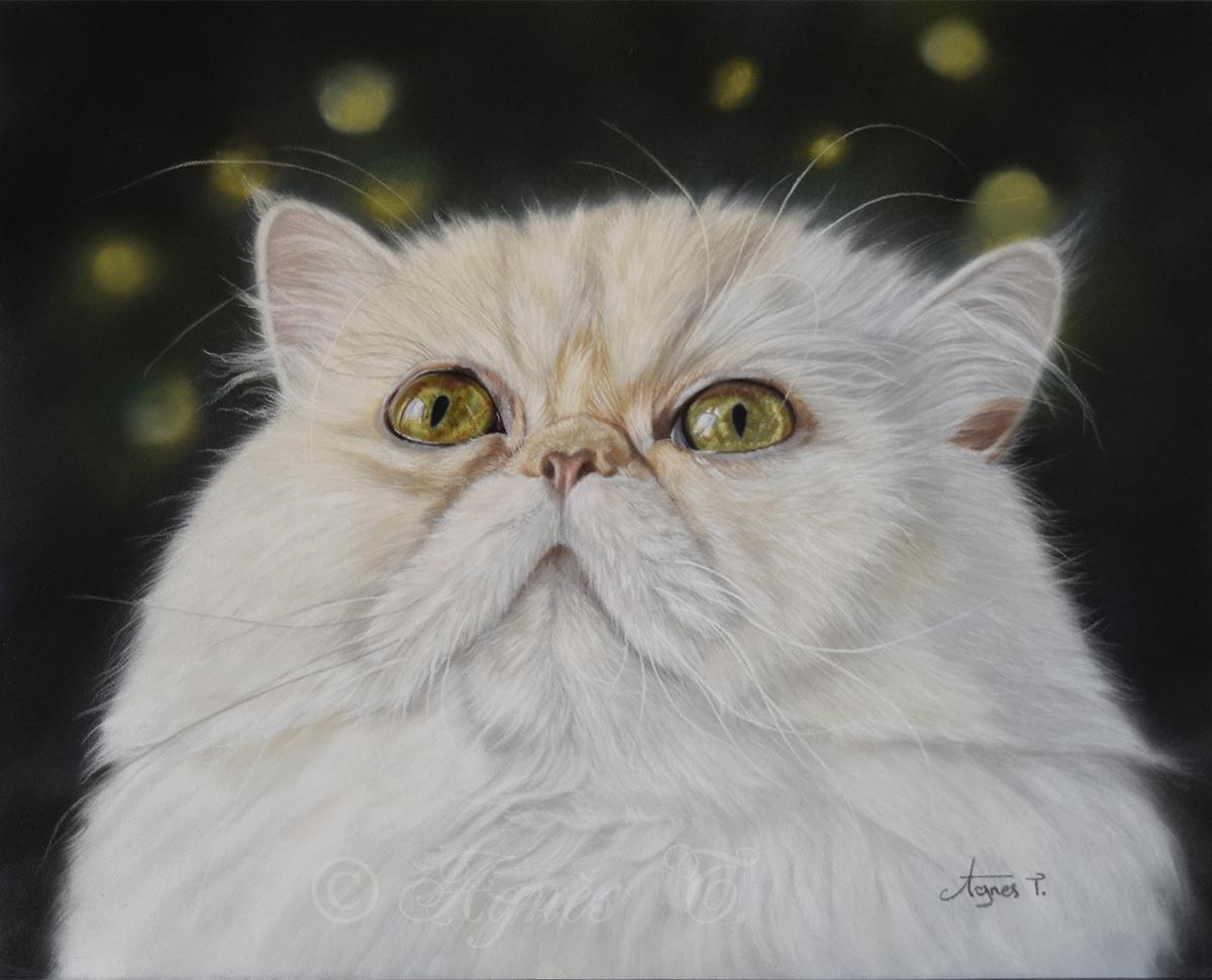 Oliver, persan crème