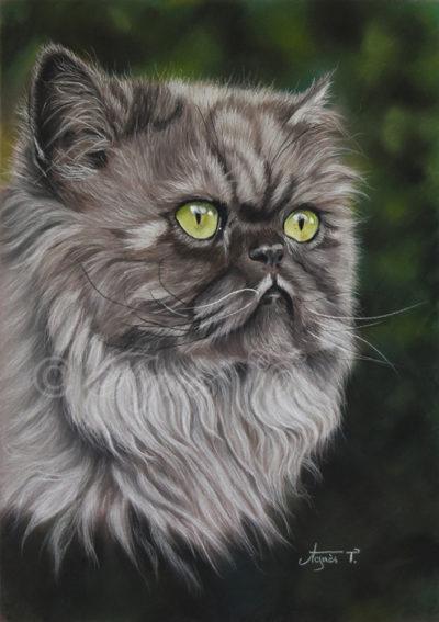 Nermal, souvenir d'un magnifique chat persan