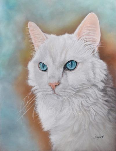 Puff, jolie minette aux yeux bleus
