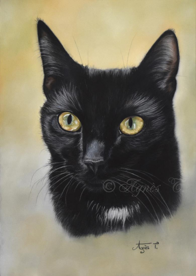 Cosmo, the black cat